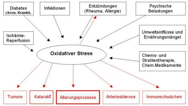 Die Ursachen für oxidativen Stress sind sehr vielfältig, ebenso die Auswirkungen.